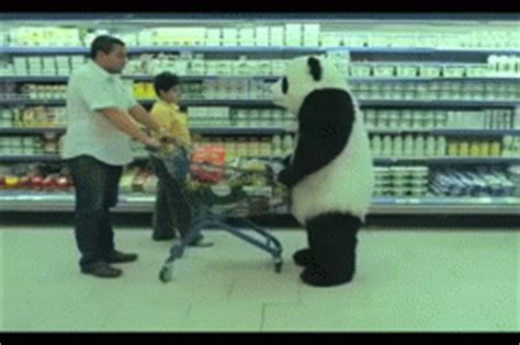 Funny Memes And Gifs - panda fail gif find share on giphy