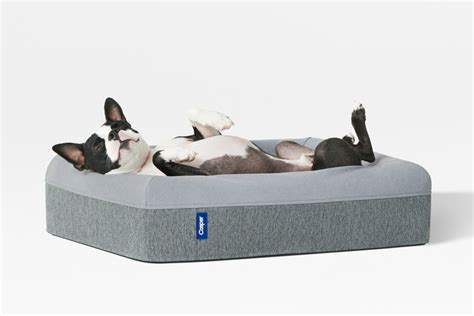 casper bed casper dog mattress dog milk