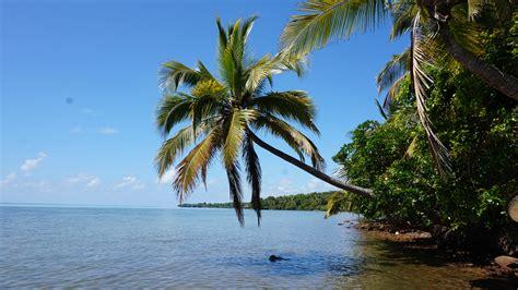 gambar pantai laut pohon lautan menanam melihat