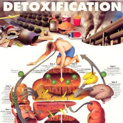 Moderate Detox Diet by Think Detox Diets Are A Fad Think Again Everything You