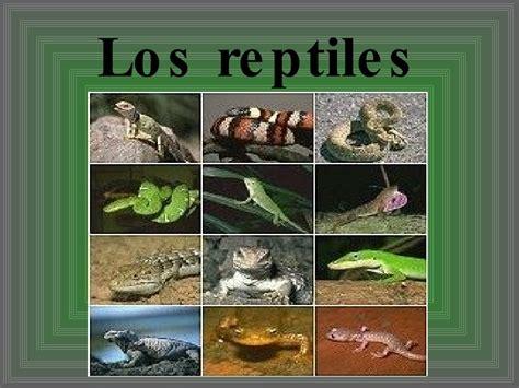 imagenes de animales reptiles los reptiles