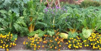 Companion Flowers For Vegetable Garden Two And A Farm Companion Planting