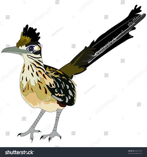 Roadrunner Email Address Lookup Greater Roadrunner Bird Stock Vector Illustration 63637378