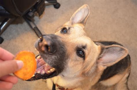 sweet potato treats 15 delectable treats for your four legged bff barkpost