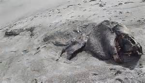 new zealand mysterious sea monster washes up in new zealand wordlesstech