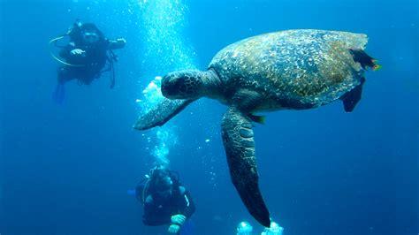dive package scuba diving packages metropolitan touring