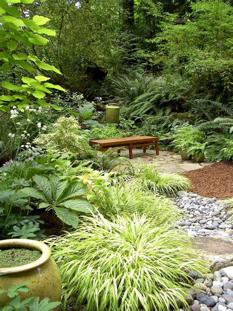 17 best images about garden border pt shade evergreen on