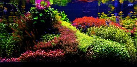 Florida Home Styles what s your aquascape style cflas