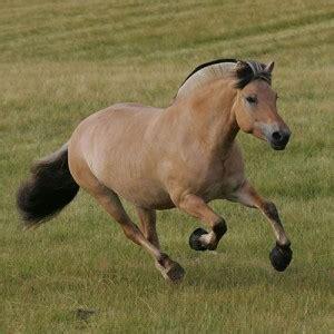 fjord quizlet welk paarden ras ben jij quot details quizlet nl
