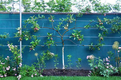 Baumkrone Schneiden Kosten by Gartentipps Im Juni Nutzgarten Gartenzauber