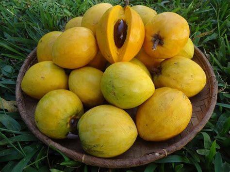 khasiat  manfaat buah alkesa  kesehatan