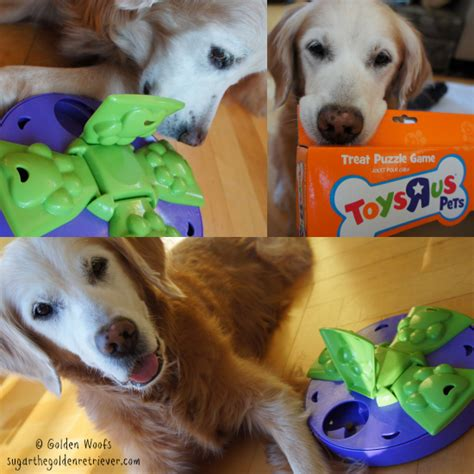 treat puzzles puzzle toys dogs images