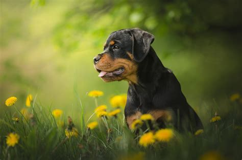3742 dog hd wallpapers background images wallpaper abyss 5949 dogs hd wallpapers backgrounds wallpaper abyss