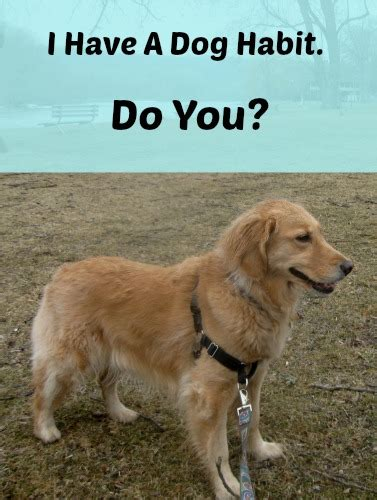 why do golden retrievers eat everything i ve got a habit something wagging this way comes