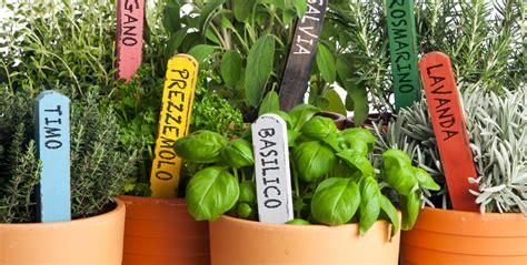giardino piante aromatiche profumiamo l orto con piante aromatiche parrocchia