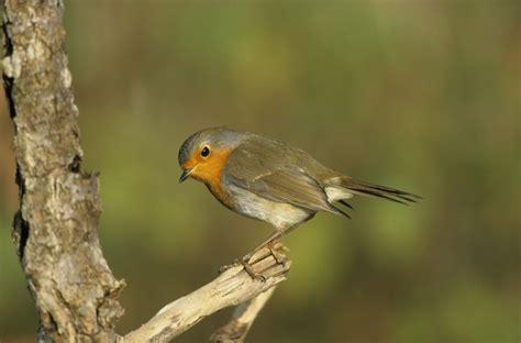 Vogelarten Im Garten by Vogelfreundlicher Garten Vogel Und Naturschutzgruppe Brandau E V