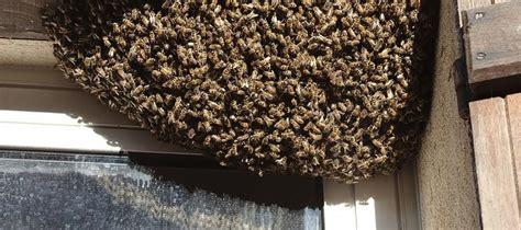 Wespennest Balkon by Bienen Und Wespen Im Fensterrahmen 187 Ursachen Abhilfe
