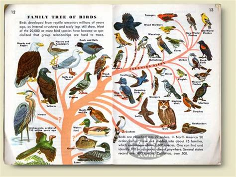 the birds books papersponge vintage ephemera postcard paper book