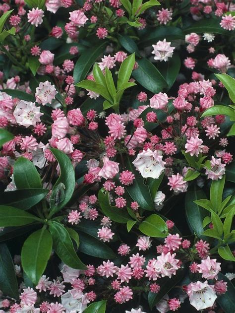 low flowering shrubs 25 best ideas about plants on garden