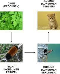 Makanan Kucing Im Organik aliran energi dan daur biogeokimia guru kito