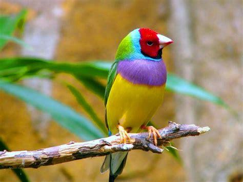 imagenes de aves asombrosas fonditos mira mis colores animales p 225 jaros mascotas aves