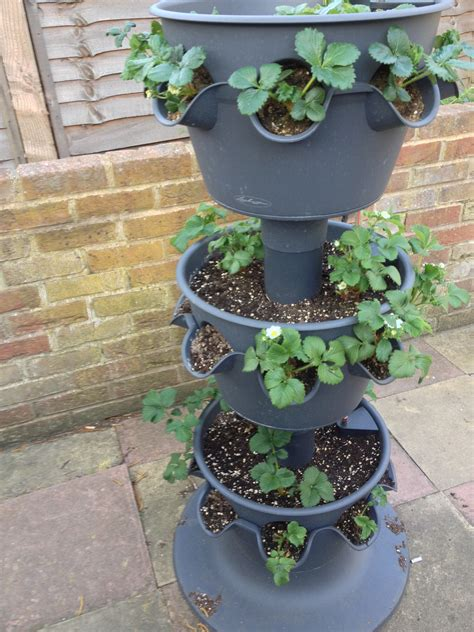 3 Tier Strawberry Planter by Strawberry Plant Photos