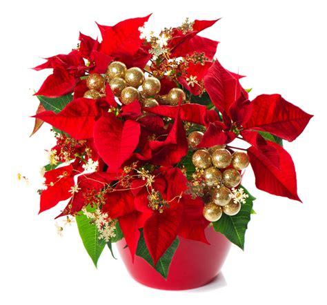 dillo con i fiori buon natale dillo con i fiori e le piante wineflowers
