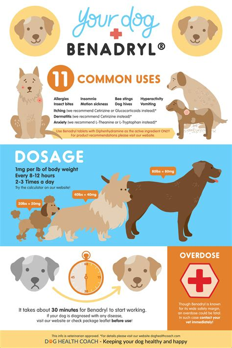 antihistamine for dogs benadryl for dogs uses side effects dosage overdose vet approved