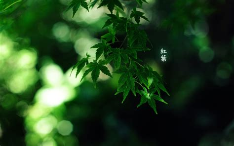 green japanese wallpaper green japan nature trees forest leaves bamboo japanese