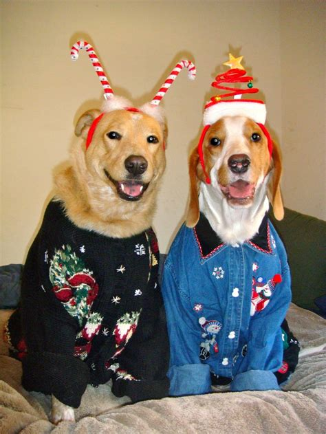 puppies in sweaters adorable dogs in horrible sweaters