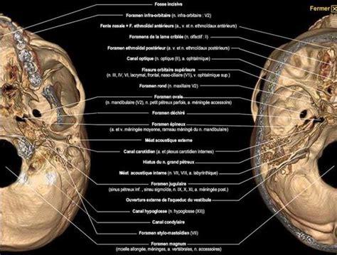 Foramen Anatomy