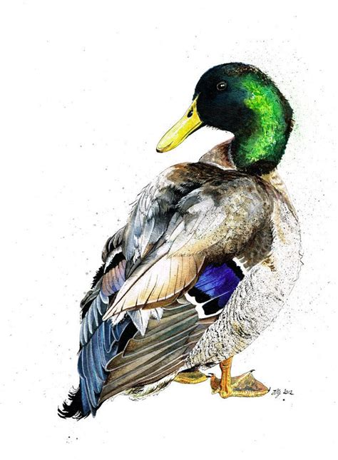 watercolor duck tutorial 105 best images about ducks geese and other wild fowl on