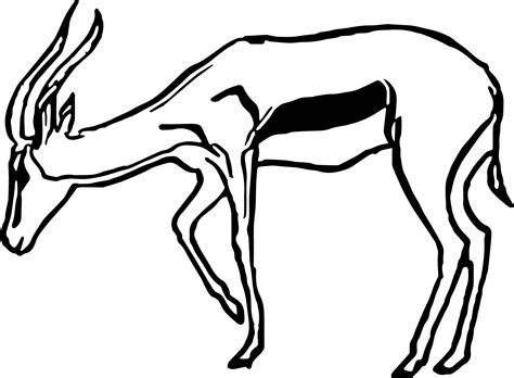 coloring page from photo more from site buck coloring pages coloring page antelope