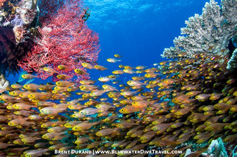 Canon Powershot G7x Ii High Recommended underwater settings for the canon 5d iii underwater