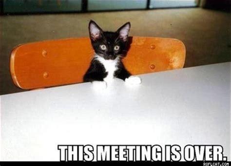 cats  secret meetings   attempt  control