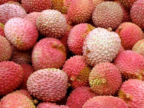 lychee fruit inside lychee fruit inside 28 images fruits in season