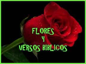versculos biblicos en rosas flores y versos biblicos youtube