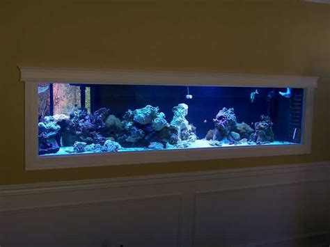 saltwater aquarium in wall 180 gallon in wall reef in wall 300 gallon plywood glass reef tank build um yes
