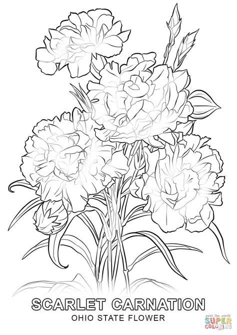 coloring pictures of state flowers ohio state flower coloring page free printable coloring