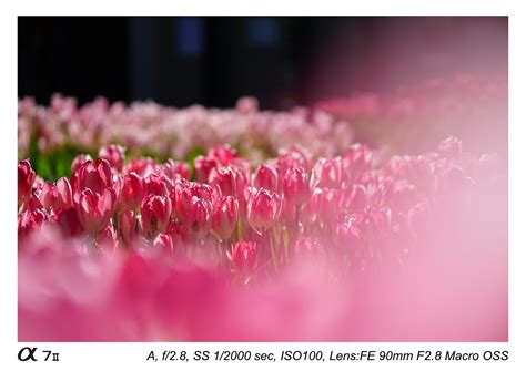 Sony 90mm F 2 8g Oss Macro G Lens sony fe 90mm f 2 8 g oss macro lens sle images daily
