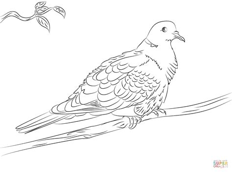Turtle Dove Template by Pages Of Turtle Doves Coloring Pages Coloring Pages