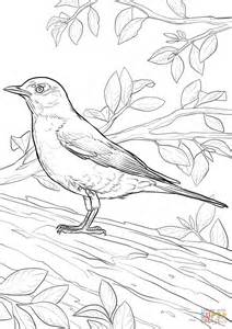 robin colors american robin coloring page free printable coloring pages