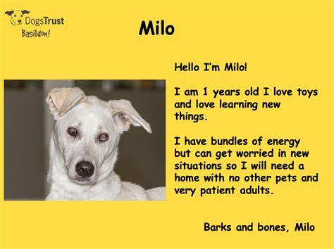 dogs trust dogs trust basildon adopt a cherrydown vets
