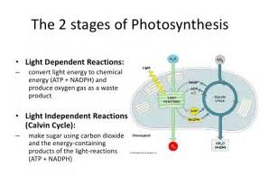 light reaction equation 3 8 8 2 photosynthesis ppt