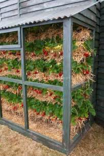 strawberries growing vertically interesting way to use