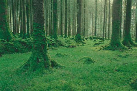 imagenes de bosques verdes paisajes verdes taringa