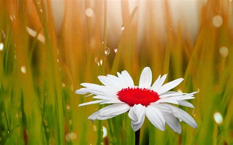 images of beautiful flowers 133 beautiful pictures of flower images wallpaper photos