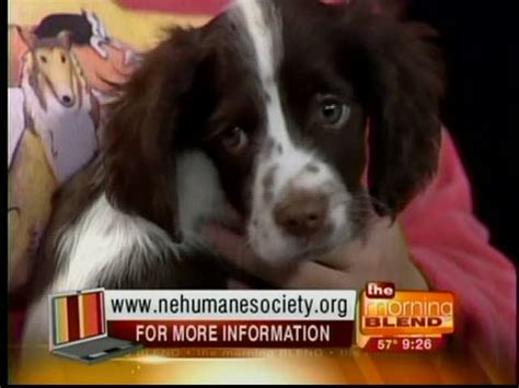 nebraska humane society dogs pin by dianne thompson on adopot a loving pet today