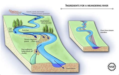 meandering river diagram 10 05 2009 alfalfa sprouts key to discovering how