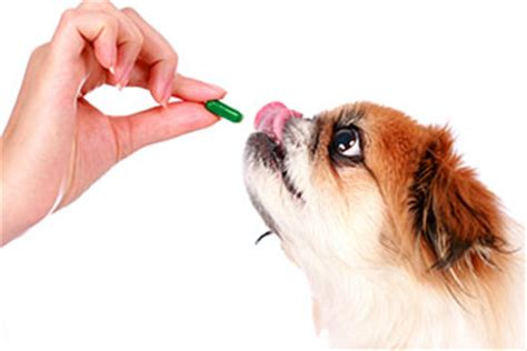 alprazolam for dogs noise phobias in dogs crash boom